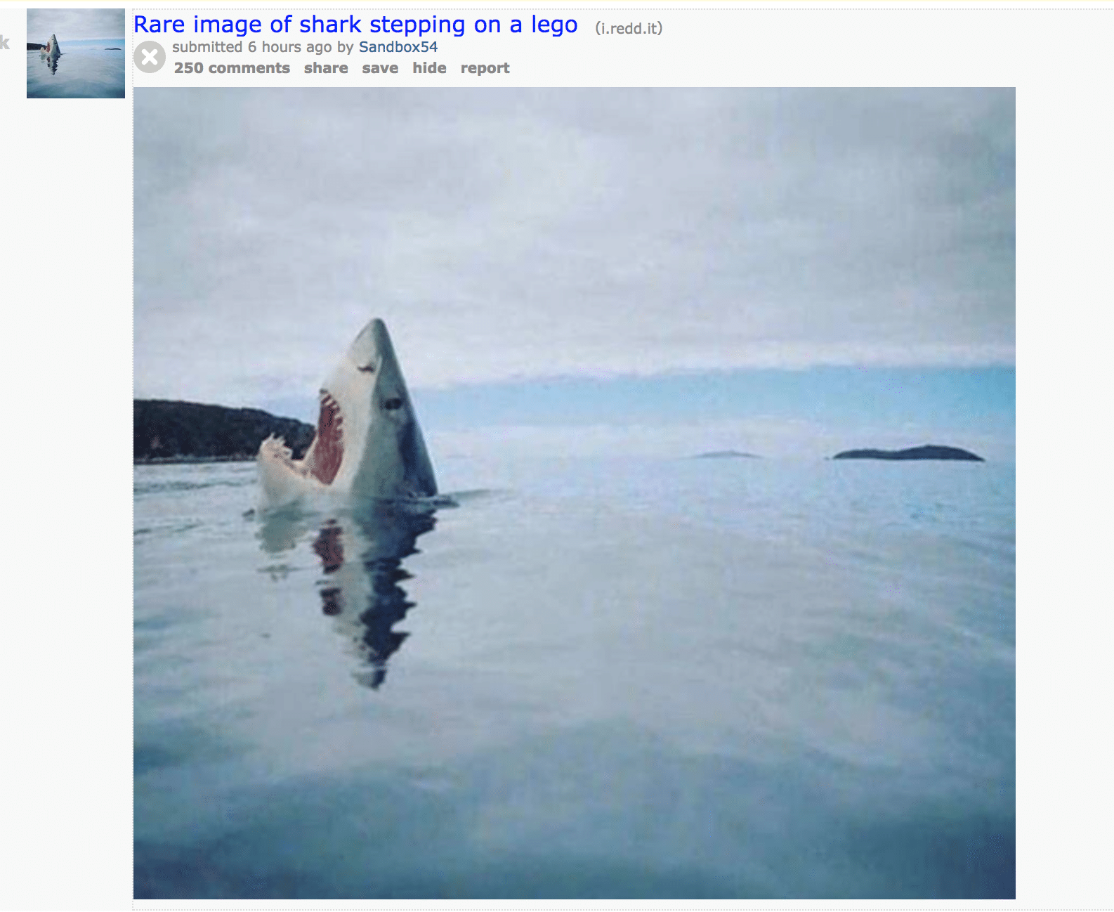 Redditors rare image of shark